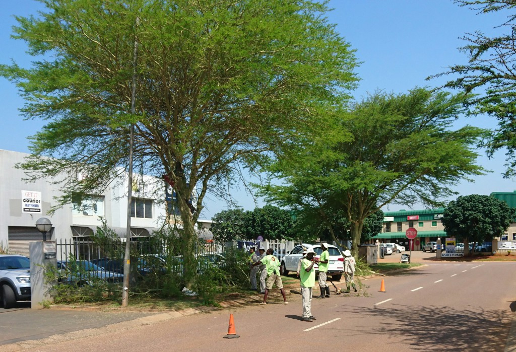 pruning in business park